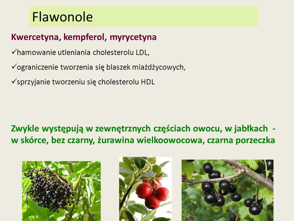 Flawonole Kwercetyna, kempferol, myrycetyna