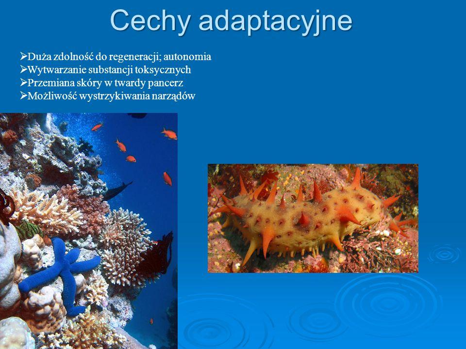 Cechy adaptacyjne Duża zdolność do regeneracji; autonomia