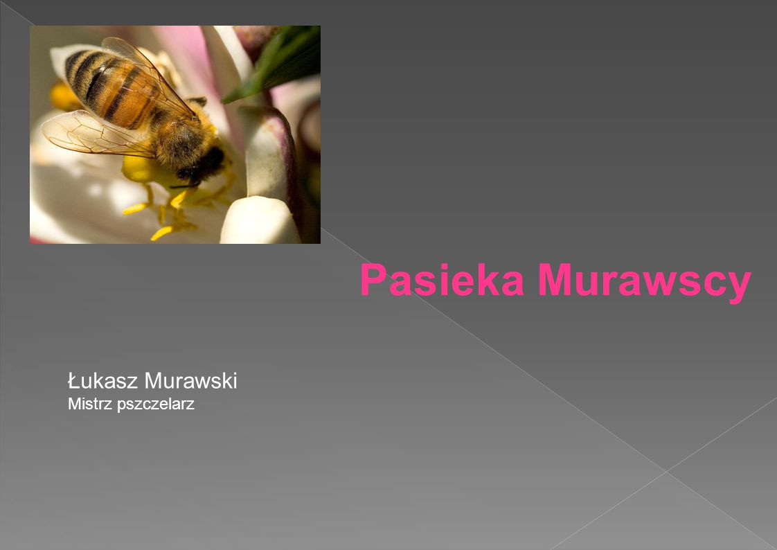 Pasieka Murawscy Łukasz Murawski Mistrz pszczelarz
