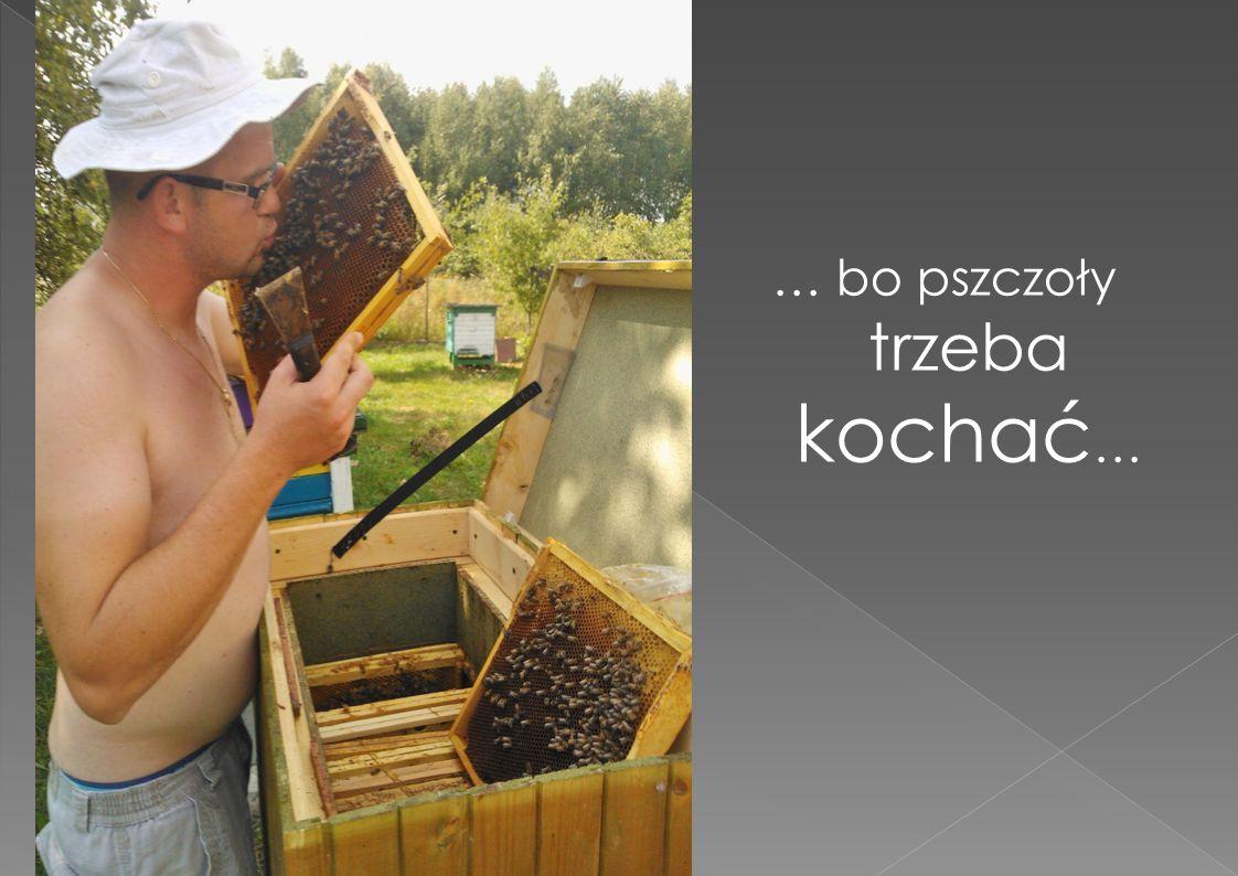 … bo pszczoły trzeba kochać…