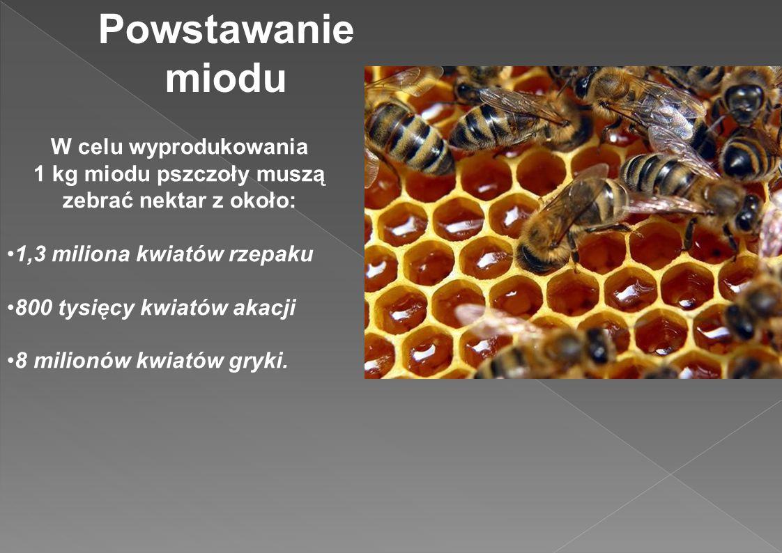 1 kg miodu pszczoły muszą zebrać nektar z około: