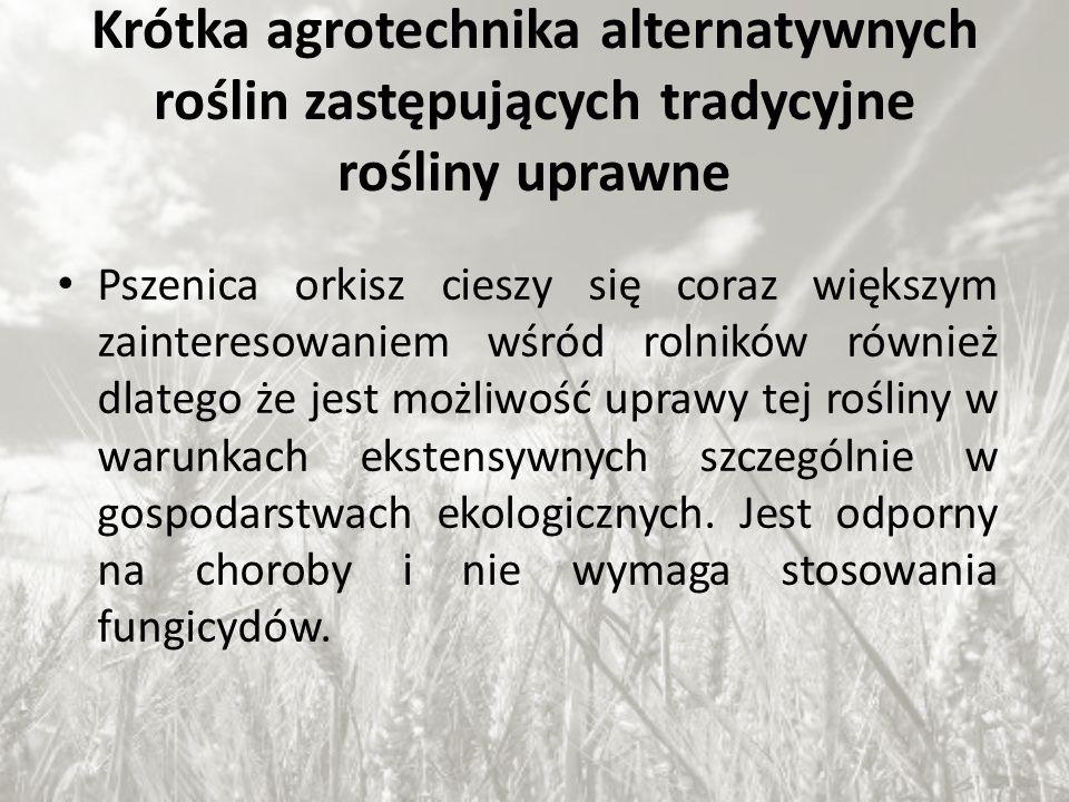 Krótka agrotechnika alternatywnych roślin zastępujących tradycyjne rośliny uprawne