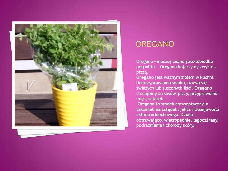 Oregano – inaczej znane jako lebiodka pospolita