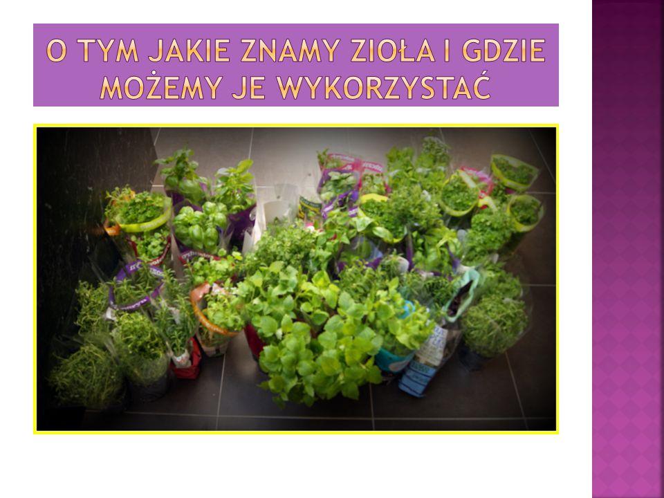 O tym jakie znamy zioła i gdzie możemy je wykorzystać