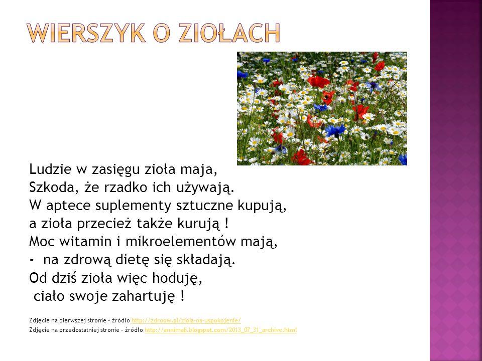 Wierszyk o ziołach Ludzie w zasięgu zioła maja,