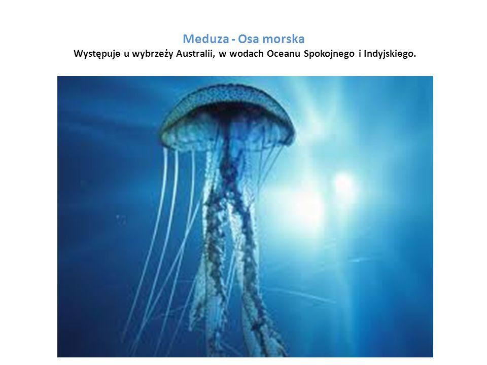 Meduza - Osa morska Występuje u wybrzeży Australii, w wodach Oceanu Spokojnego i Indyjskiego.