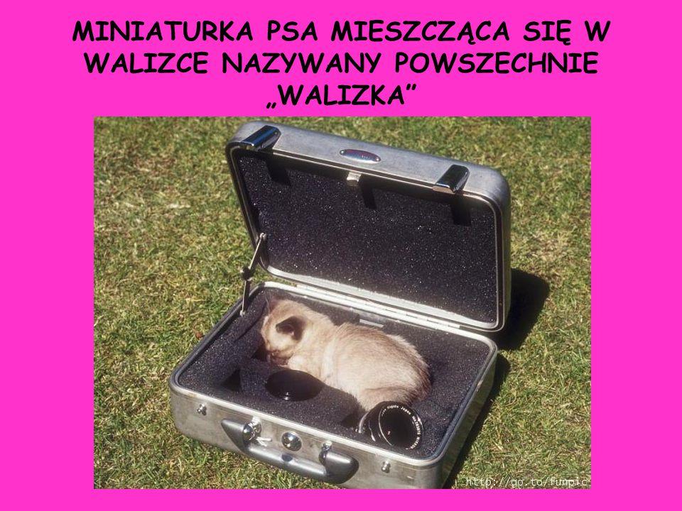 """MINIATURKA PSA MIESZCZĄCA SIĘ W WALIZCE NAZYWANY POWSZECHNIE """"WALIZKA"""