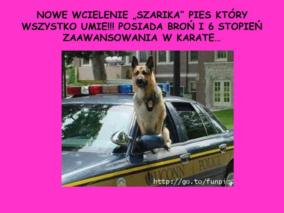 """NOWE WCIELENIE """"SZARIKA PIES KTÓRY WSZYSTKO UMIE"""