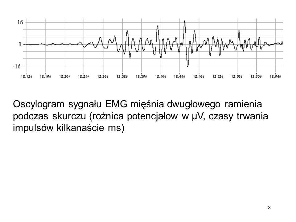 Oscylogram sygnału EMG mięśnia dwugłowego ramienia podczas skurczu (rożnica potencjałow w μV, czasy trwania impulsów kilkanaście ms)