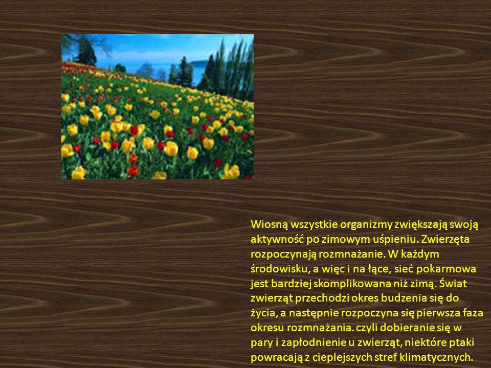 Wiosną wszystkie organizmy zwiększają swoją aktywność po zimowym uśpieniu.