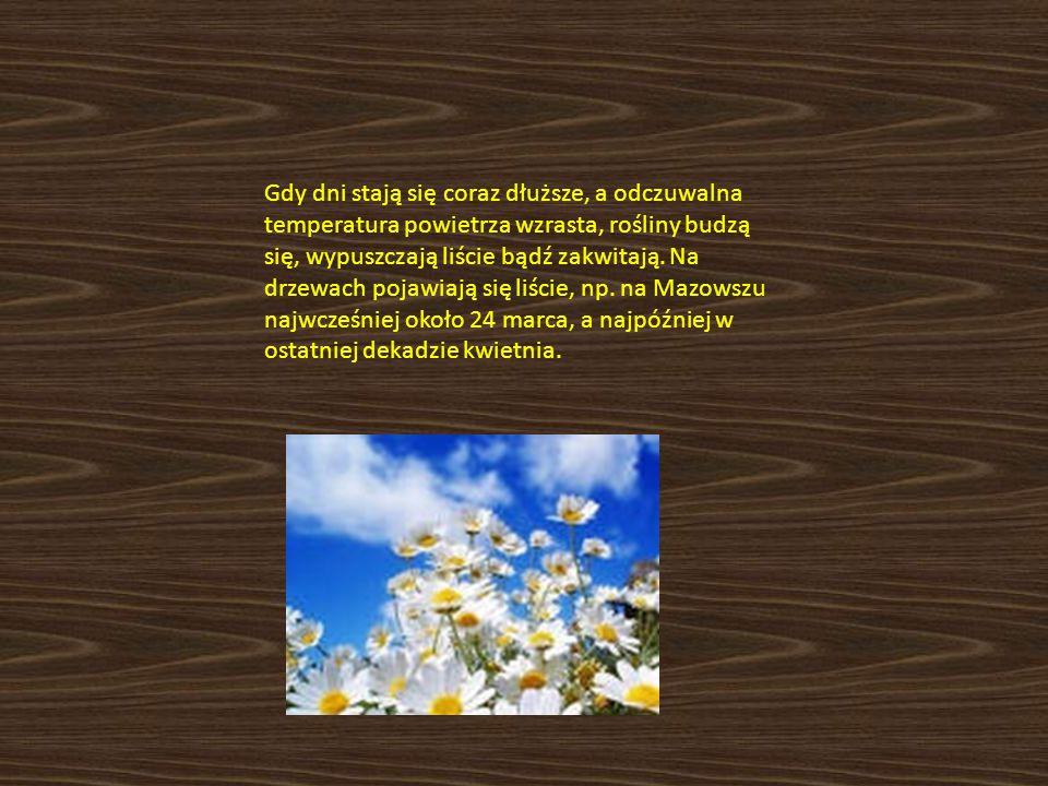 Gdy dni stają się coraz dłuższe, a odczuwalna temperatura powietrza wzrasta, rośliny budzą się, wypuszczają liście bądź zakwitają.
