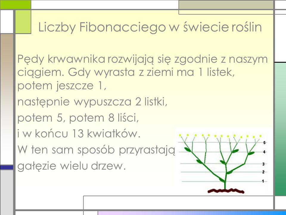 Liczby Fibonacciego w świecie roślin