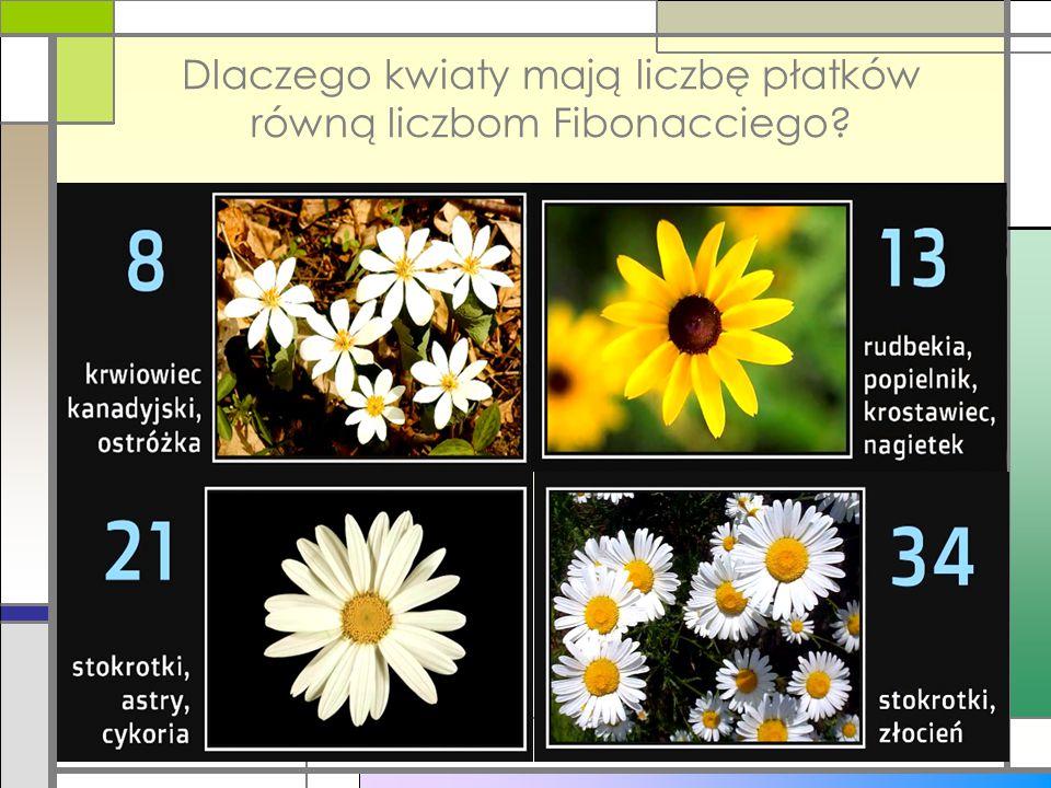 Dlaczego kwiaty mają liczbę płatków równą liczbom Fibonacciego