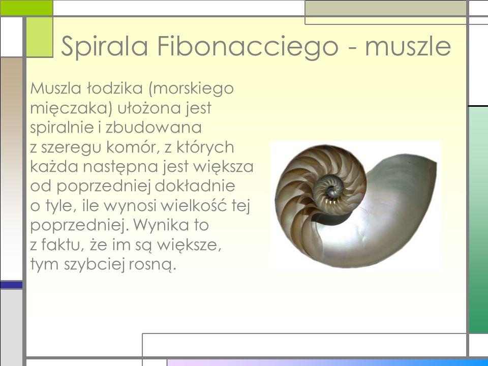 Spirala Fibonacciego - muszle