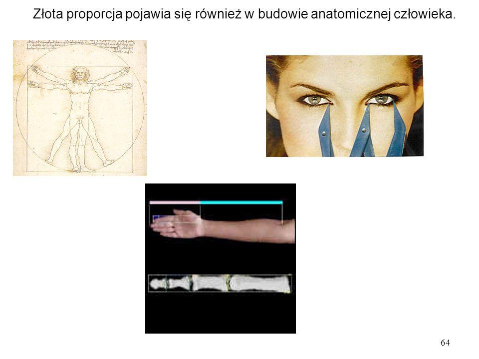 Złota proporcja pojawia się również w budowie anatomicznej człowieka.