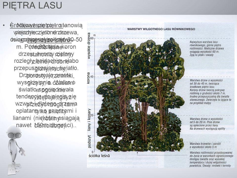 Najwyższe piętro – pojedynczych drzew tworzą wysokie drzewa (do 80m).