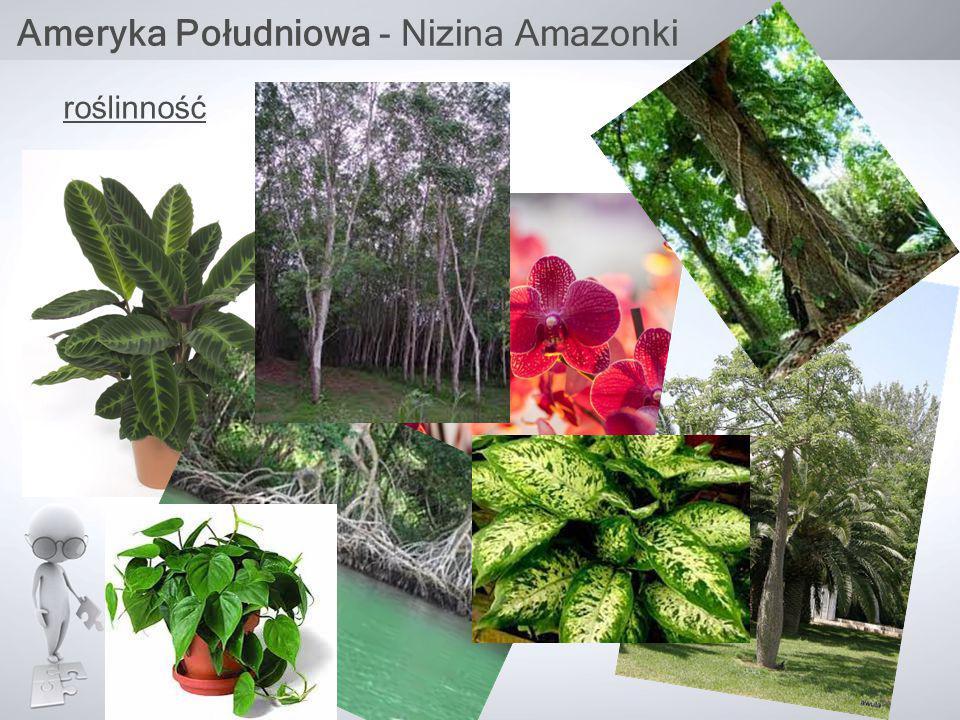 Ameryka Południowa - Nizina Amazonki