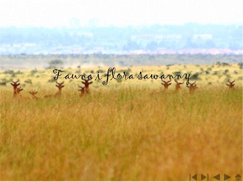 Fauna i flora sawanny