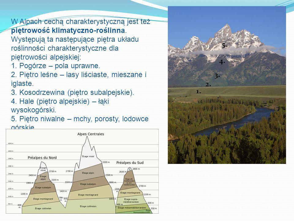W Alpach cechą charakterystyczną jest też piętrowość klimatyczno-roślinna. Występują ta następujące piętra układu roślinności charakterystyczne dla piętrowości alpejskiej: 1. Pogórze – pola uprawne. 2. Piętro leśne – lasy liściaste, mieszane i iglaste. 3. Kosodrzewina (piętro subalpejskie). 4. Hale (piętro alpejskie) – łąki wysokogórski. 5. Piętro niwalne – mchy, porosty, lodowce górskie.