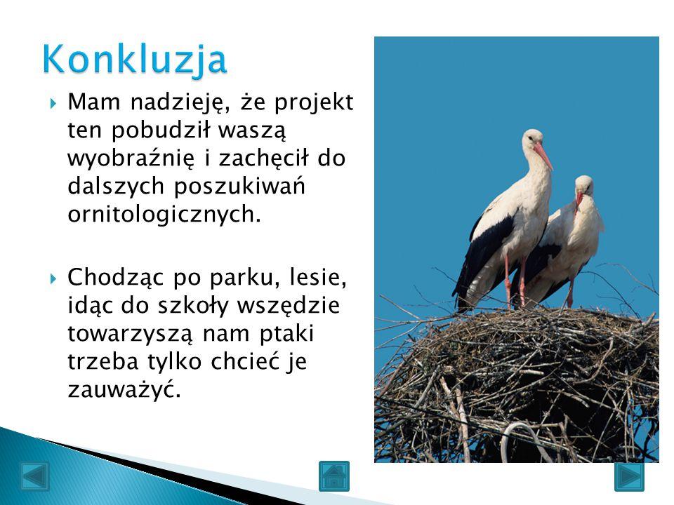 Konkluzja Mam nadzieję, że projekt ten pobudził waszą wyobraźnię i zachęcił do dalszych poszukiwań ornitologicznych.