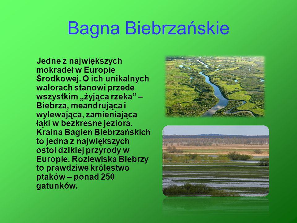 Bagna Biebrzańskie