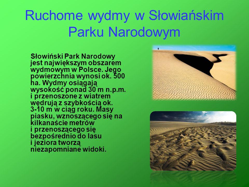 Ruchome wydmy w Słowiańskim Parku Narodowym