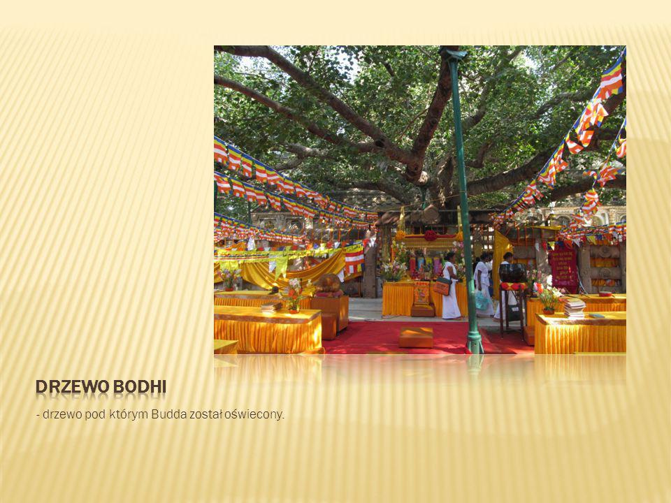 drzewo Bodhi - drzewo pod którym Budda został oświecony.
