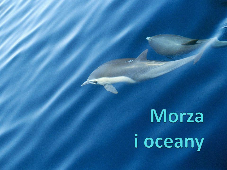 Morza i oceany