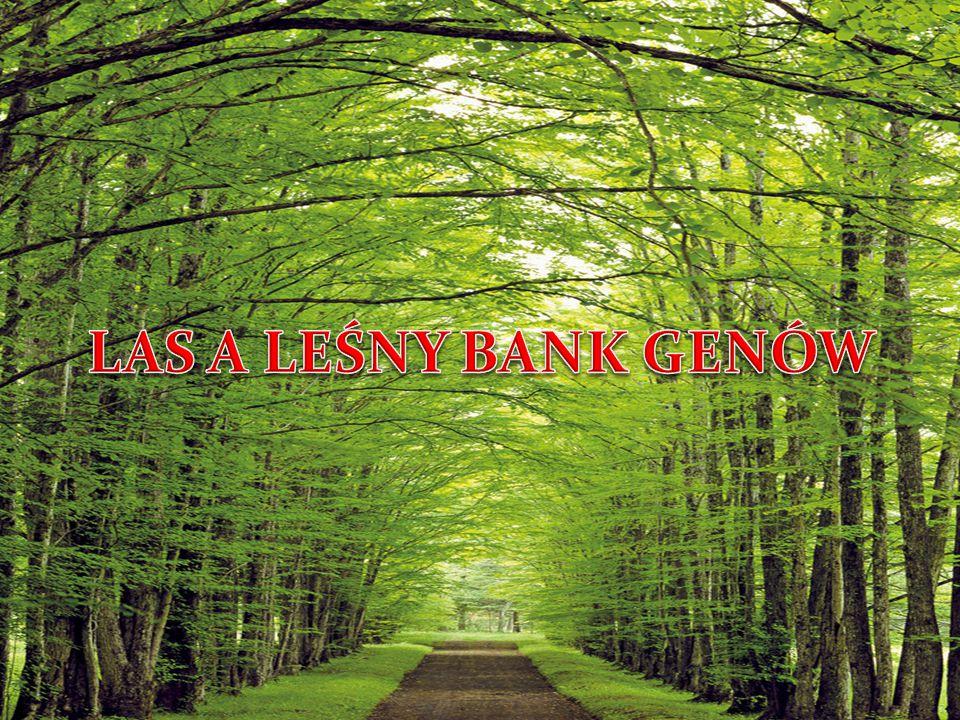 LAS A LEŚNY BANK GENÓW