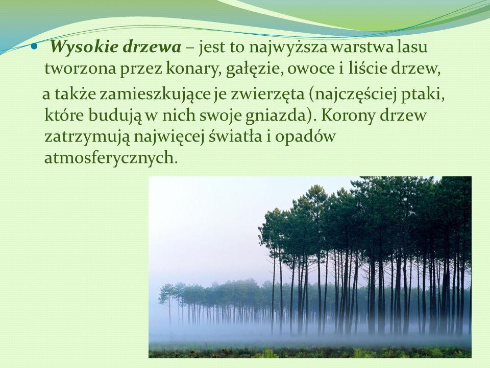 Wysokie drzewa – jest to najwyższa warstwa lasu tworzona przez konary, gałęzie, owoce i liście drzew,