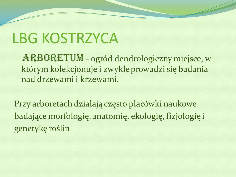 LBG KOSTRZYCA Arboretum - ogród dendrologiczny miejsce, w którym kolekcjonuje i zwykle prowadzi się badania nad drzewami i krzewami.