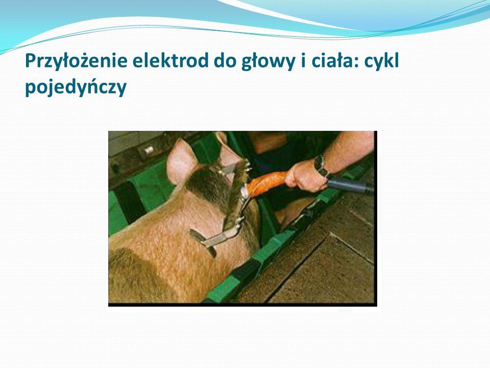 Przyłożenie elektrod do głowy i ciała: cykl pojedyńczy