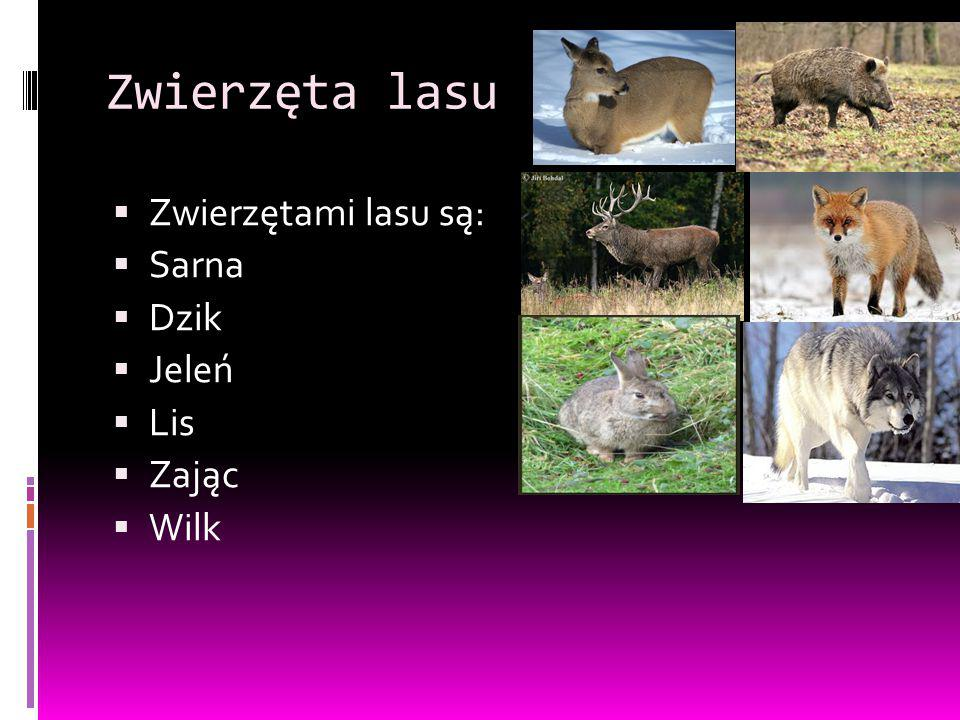 Zwierzęta lasu Zwierzętami lasu są: Sarna Dzik Jeleń Lis Zając Wilk