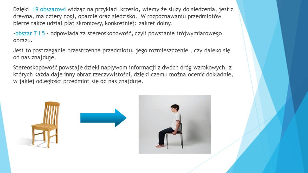 Dzięki 19 obszarowi widząc na przykład krzesło, wiemy że służy do siedzenia, jest z drewna, ma cztery nogi, oparcie oraz siedzisko. W rozpoznawaniu przedmiotów bierze także udział płat skroniowy, konkretniej: zakręt dolny.