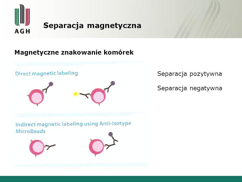Separacja magnetyczna