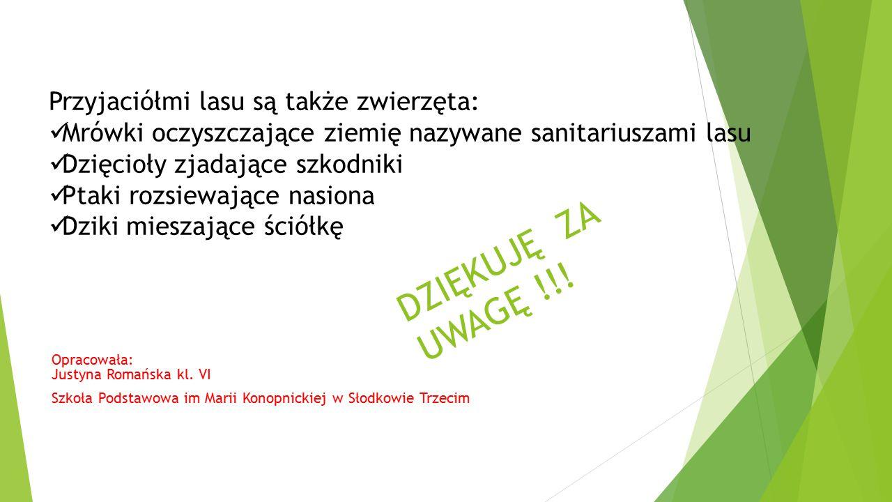 DZIĘKUJĘ ZA UWAGĘ !!! Opracowała: Justyna Romańska kl. VI