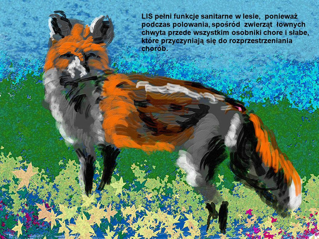 LIS pełni funkcje sanitarne w lesie, ponieważ podczas polowania, spośród zwierząt łownych chwyta przede wszystkim osobniki chore i słabe, które przyczyniają się do rozprzestrzeniania chorób.