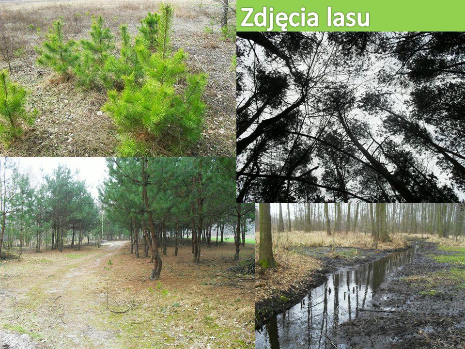 Zdjęcia lasu