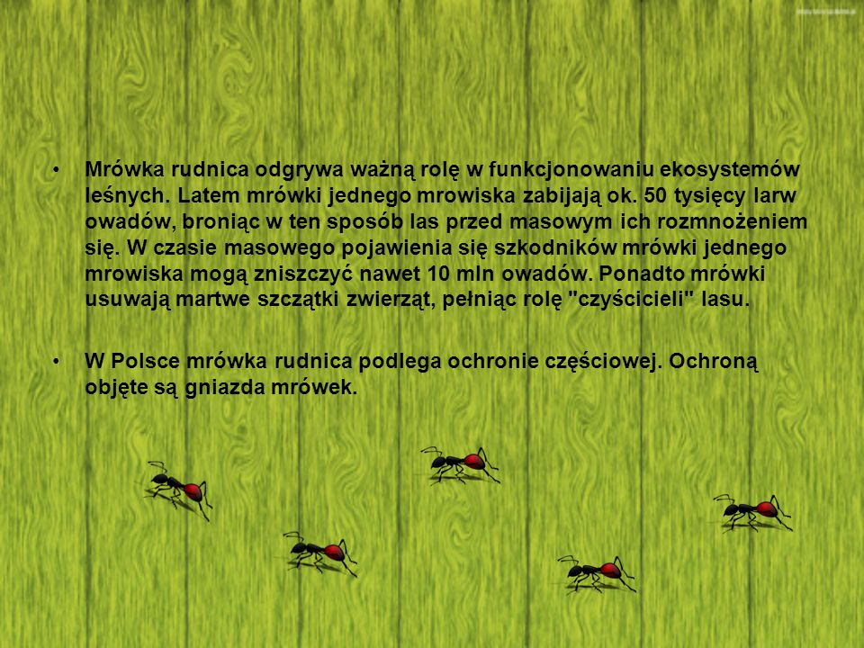 Mrówka rudnica odgrywa ważną rolę w funkcjonowaniu ekosystemów leśnych