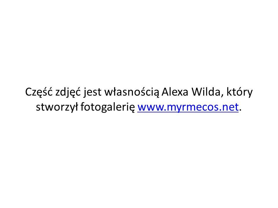 Część zdjęć jest własnością Alexa Wilda, który stworzył fotogalerię www.myrmecos.net.
