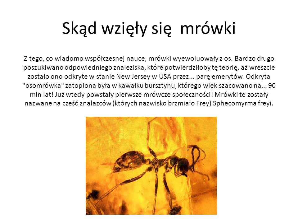 Skąd wzięły się mrówki