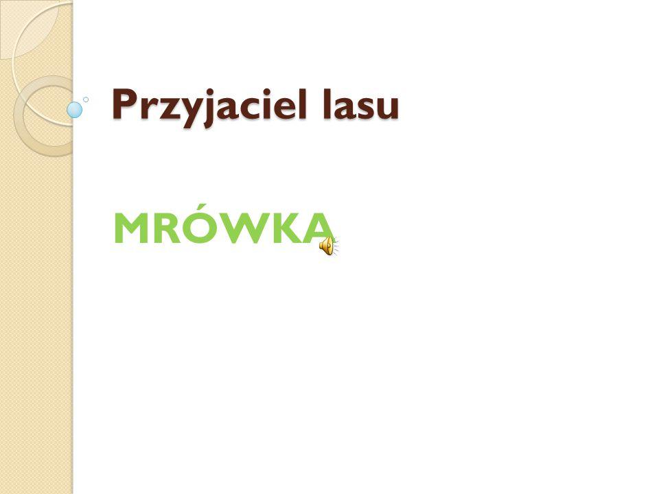 Przyjaciel lasu MRÓWKA