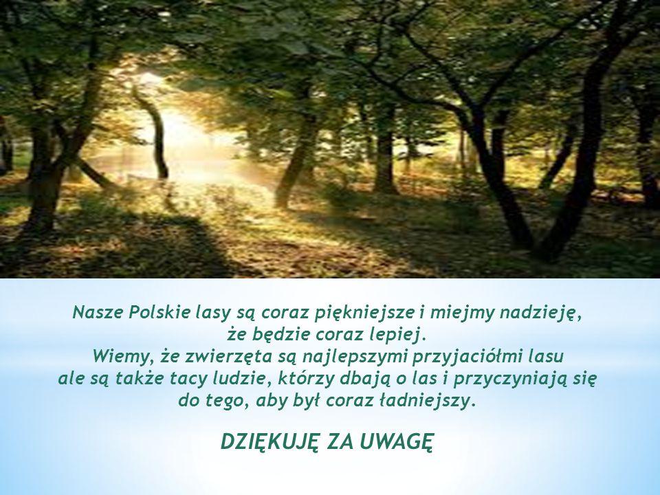 Nasze Polskie lasy są coraz piękniejsze i miejmy nadzieję, że będzie coraz lepiej.