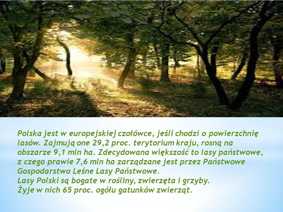Polska jest w europejskiej czołówce, jeśli chodzi o powierzchnię lasów