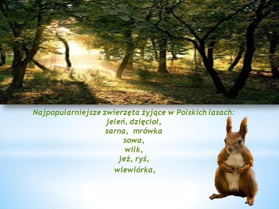 Najpopularniejsze zwierzęta żyjące w Polskich lasach: jeleń, dzięcioł, sarna, mrówka sowa, wilk, jeż, ryś,