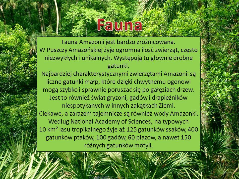 Fauna Amazonii jest bardzo zróżnicowana.