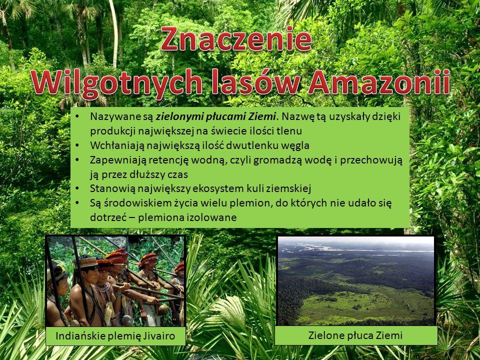 Wilgotnych lasów Amazonii