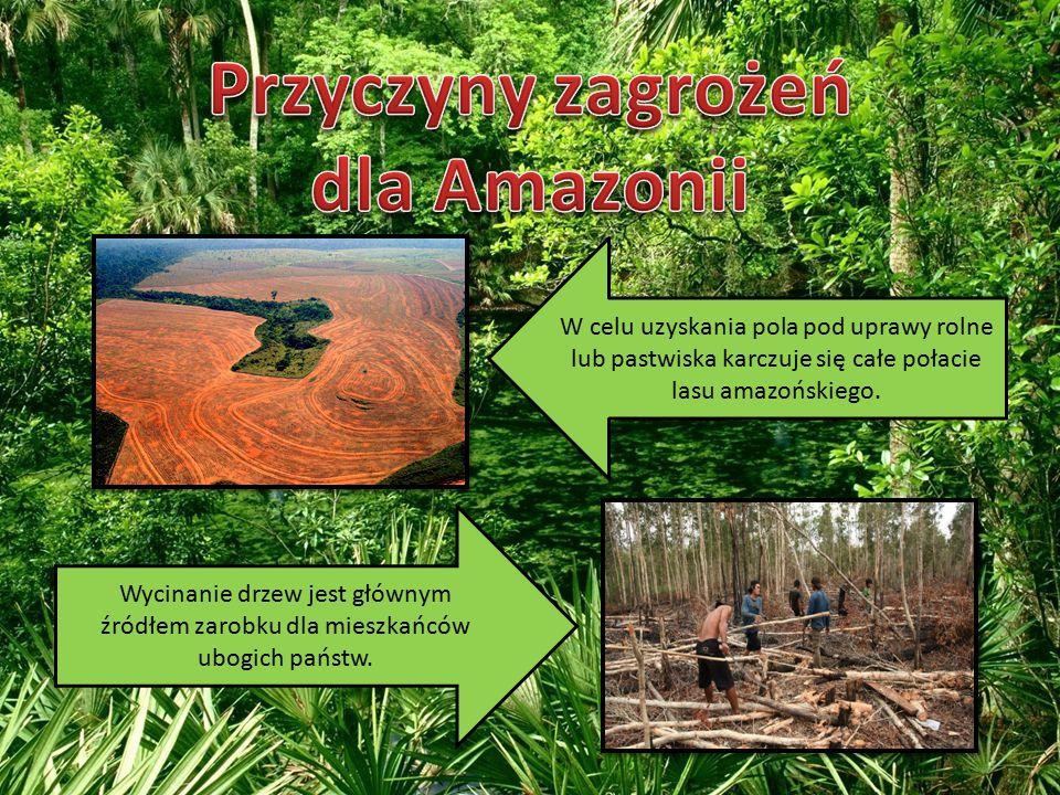 Przyczyny zagrożeń dla Amazonii