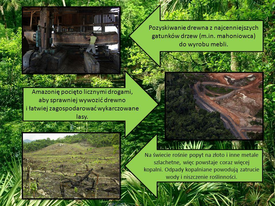Amazonię pocięto licznymi drogami,