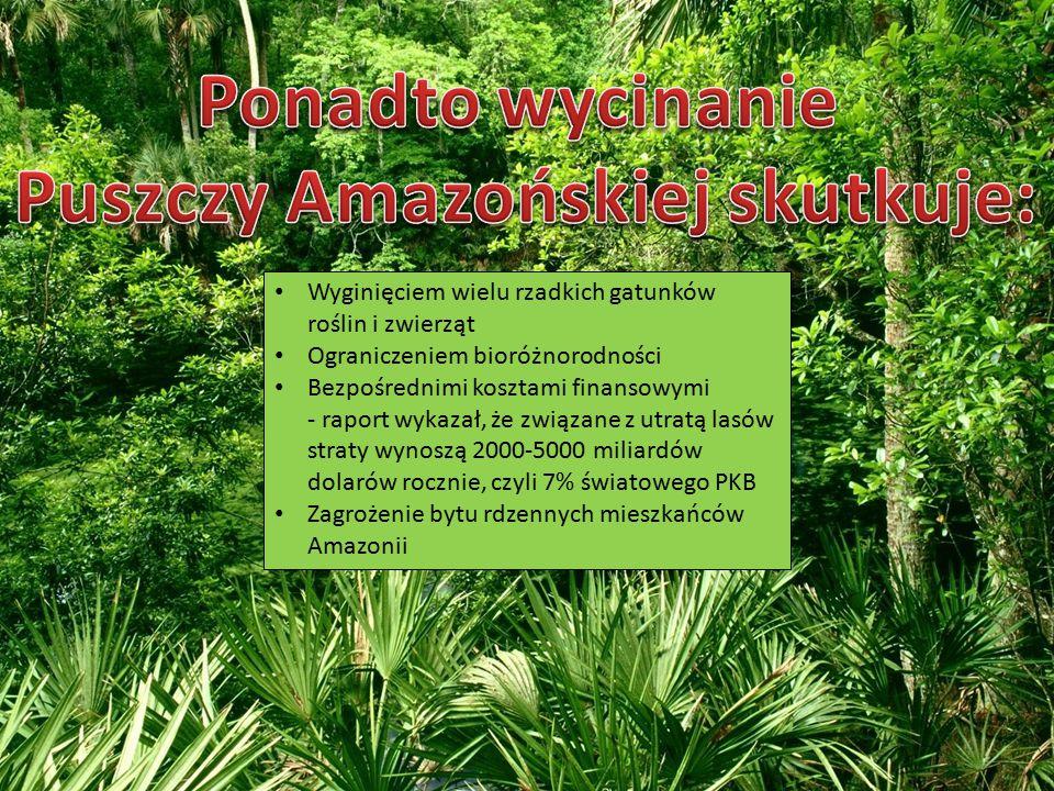 Puszczy Amazońskiej skutkuje: